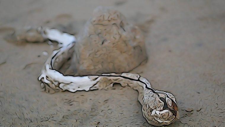 a snake made of plaster and seaweed slithers around a plaster cast boulder