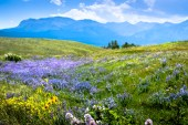 A Good Year for Flowers at Waterton