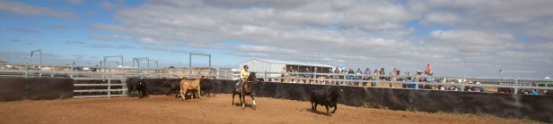 20170225_glenn-power_coorong_district_council_campdrafting_banners_s-p-7686