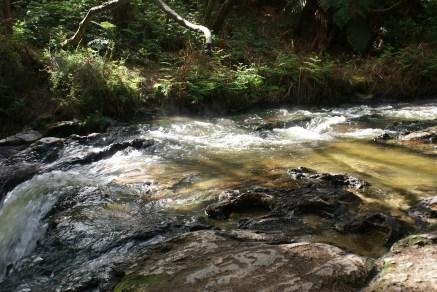Kerosene Creek, petite rivière à 37° dans le bush