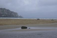 Et pour passer la nuit, le camping de Purakaunui Bay et ses lions de mer qui n'aiment pas trop la présence humaine