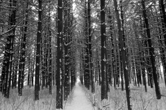 Winter Trees at Chain O Lakes