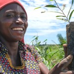 1 million trees planted to energize the Congo Basin forests