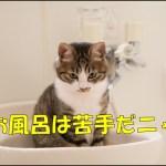 半身浴、お風呂、シャワーの時にオススメ! 人気お風呂Bluetoothスピーカー