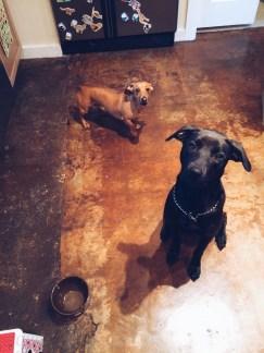 Douglas and Bailey