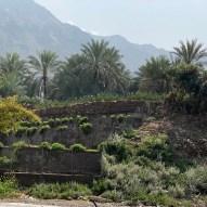 Farms at Al Nahwa, Sharjah, UAE