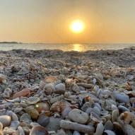 Shells on Al Zorah Beach