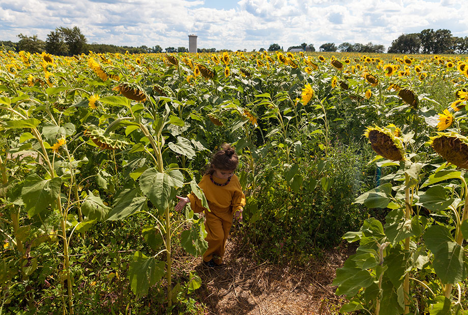 Pope Conservancy sunflower fields.