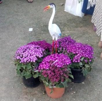 glittercodes_noida-flower-show_21