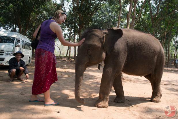 Laos baby elephant