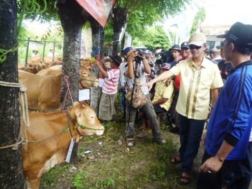 GN/Masdawi Dahlan Bupati Achmad Syafii tengah meninjau sapi program Instan Satu Saka.