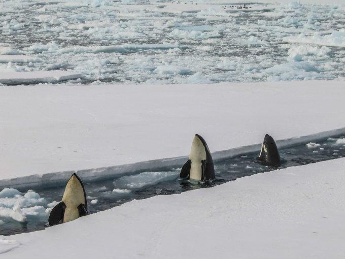 sea kayaking in antartica