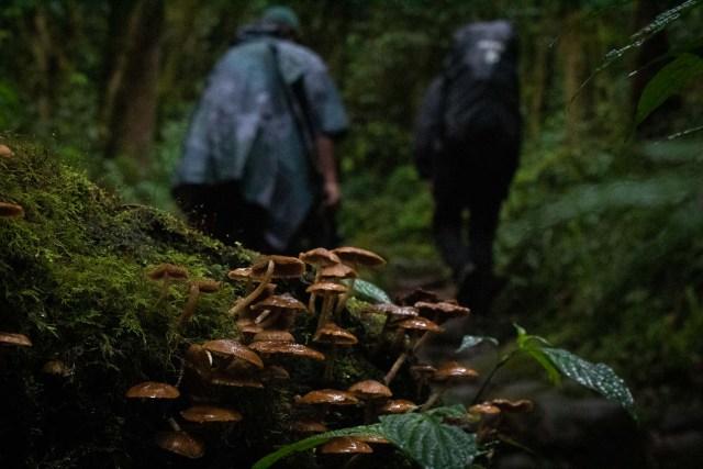 Kilimanjaro rain forest Marangu