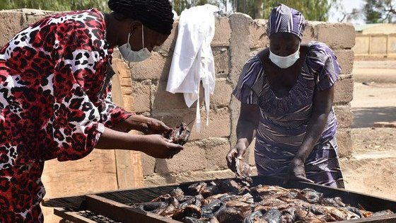 Displaced people have been trained to process the fish for sale.