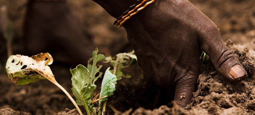 La biodiversidad que nos alimenta está gravemente amenazada