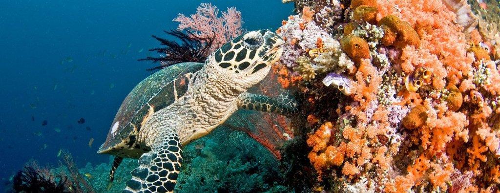 https://i1.wp.com/global.unitednations.entermediadb.net/assets/mediadb/services/module/asset/downloads/preset/assets/2019/01/11-01-2019-Coral_Reefs_Turtle.jpg/image1440x560cropped.jpg?resize=1024%2C395&ssl=1
