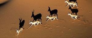 Kalahari.1