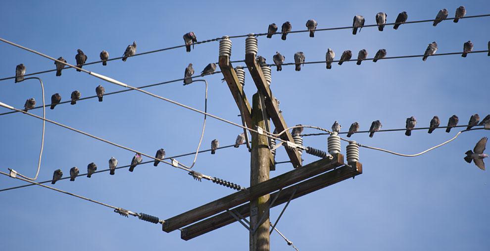 Análisis del contenido del Real Decreto 1432/2008, de 29 de agosto, por el que se establecen medidas para la protección de la avifauna contra la colisión y la electrocución en líneas eléctricas de alta tensión