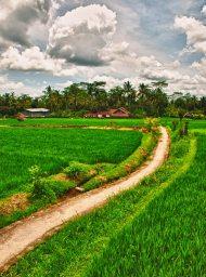 Ubud Rice Field Path | Bali, Indonesia