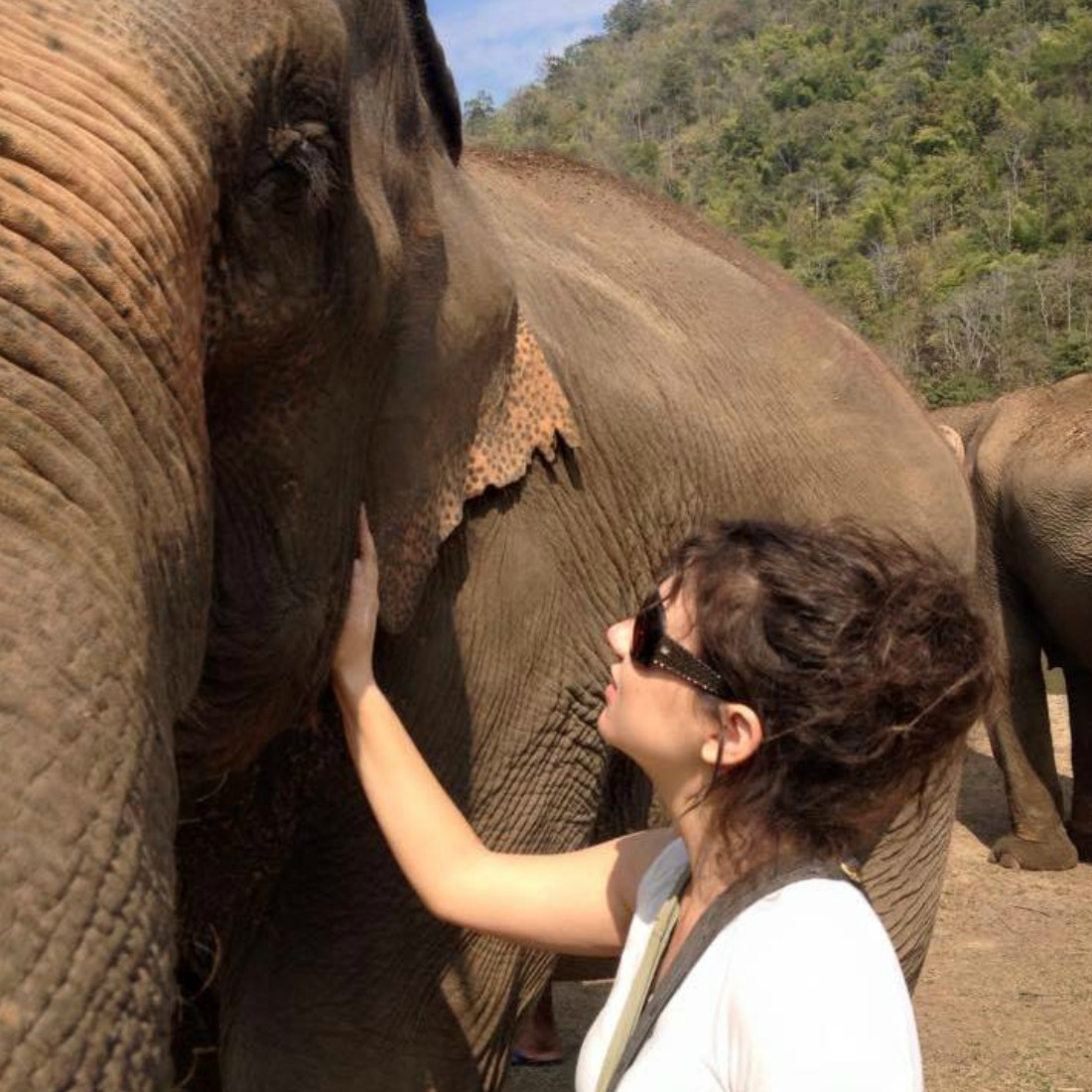 Elephant Nature Park Chiang Mai Thailand - Volunteering Sustainable Travel