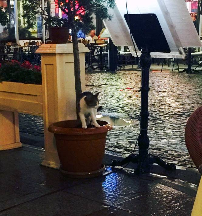 Aforementioned kitty peeing in plant at dinner