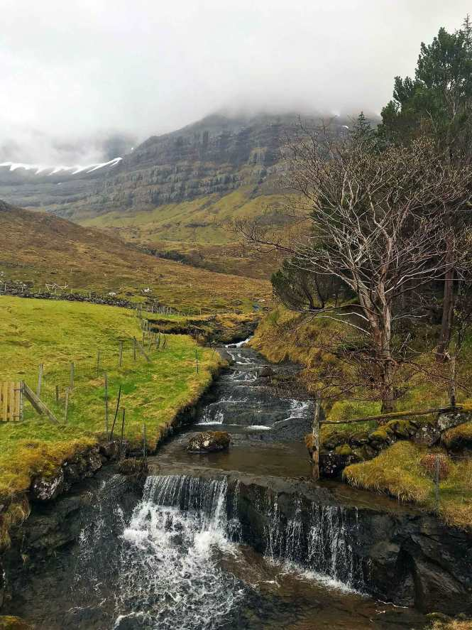restoration forest in the faroe islands