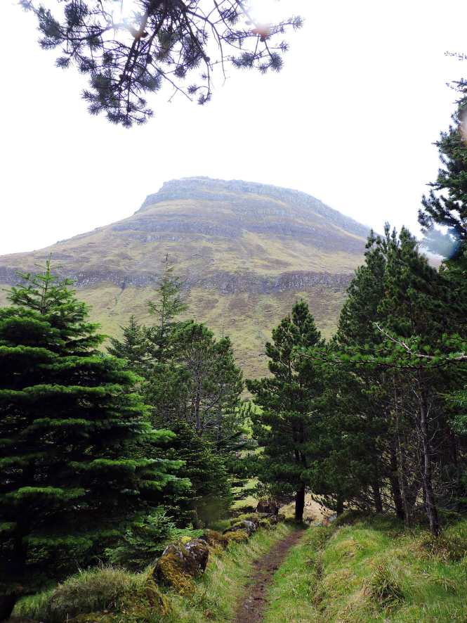restoration forest path in the faroe islands