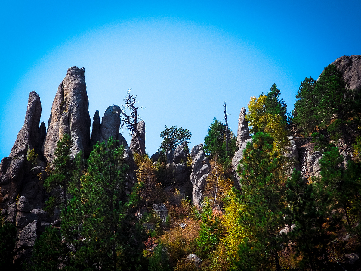 Custer State Park Needles