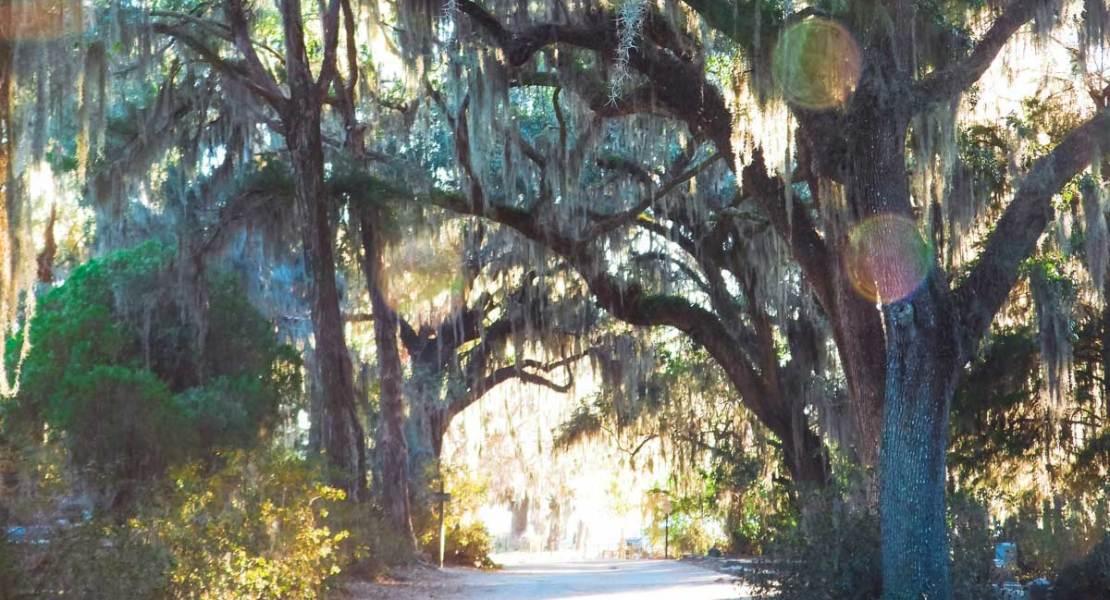 Bonaventure Cemetery trees with lens flare
