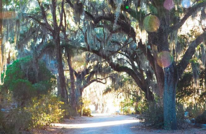 Bonaventure Cemetery trees with lens flare