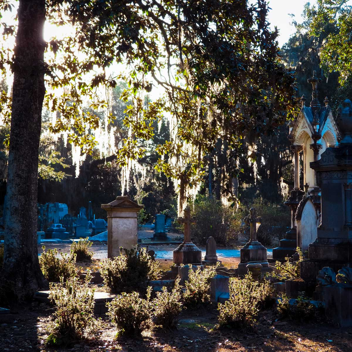 Bonaventure Cemetery in the morning