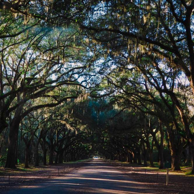 Wormsloe Plantation, one of many amazing things to do in Savannah, Georgia
