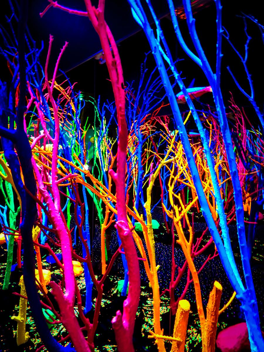 HOER glowing tree hallway