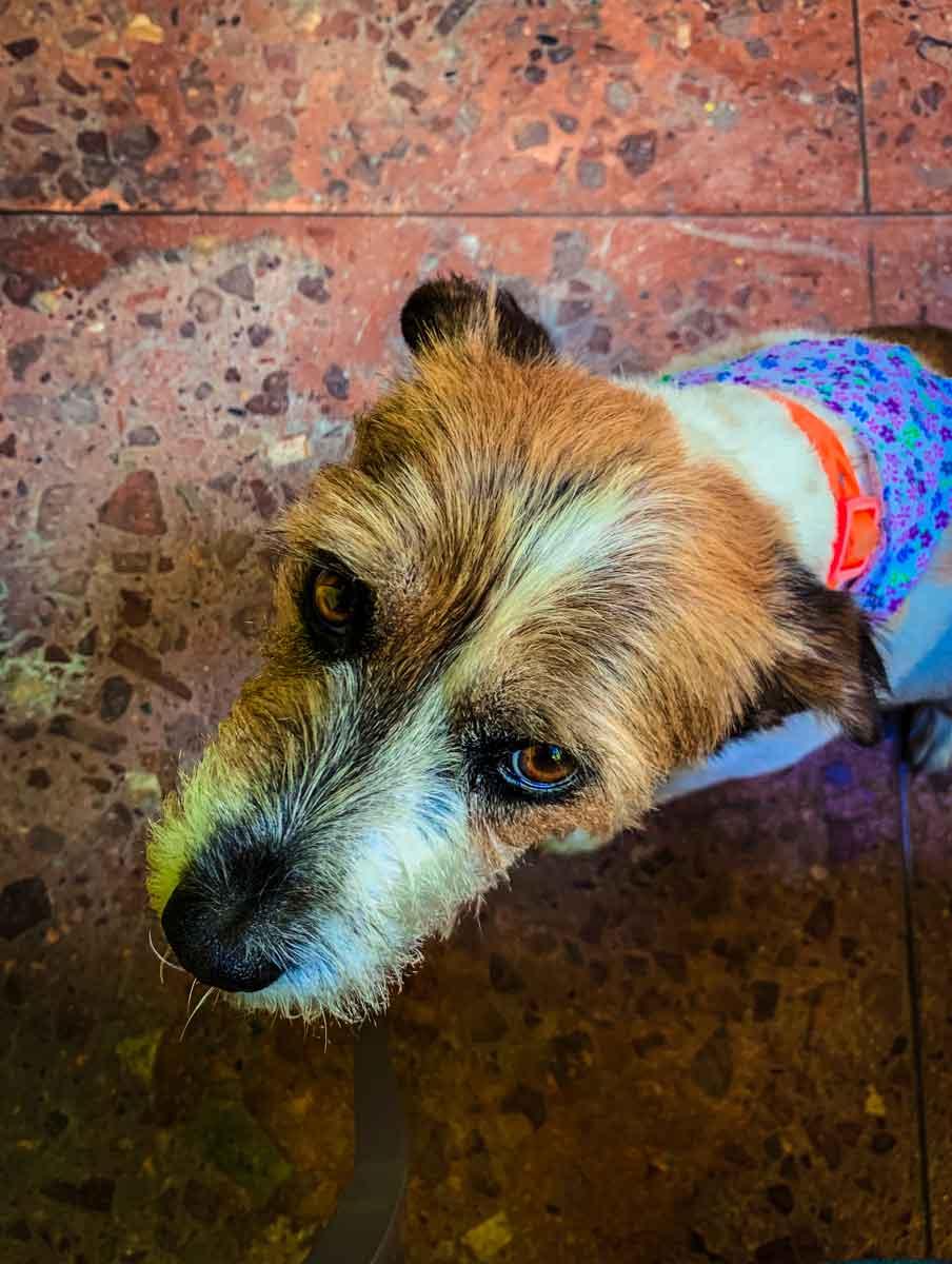 Oreo, Casa Sol's rescue dog