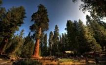 sequoia_national_park_