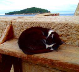 kittybyharborC