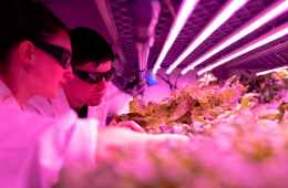scientist checking crops in laboratory