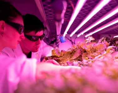 scientifique, contrôle des cultures en laboratoire