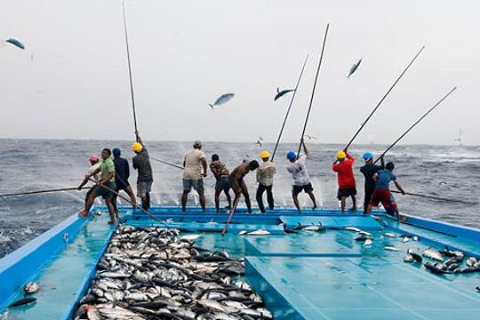 African fisheries
