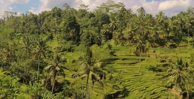Tegalalang rice terraces Bali Level 3