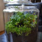 Closed Terrariums Indoor Gardens Under Glass Global Garden Lab
