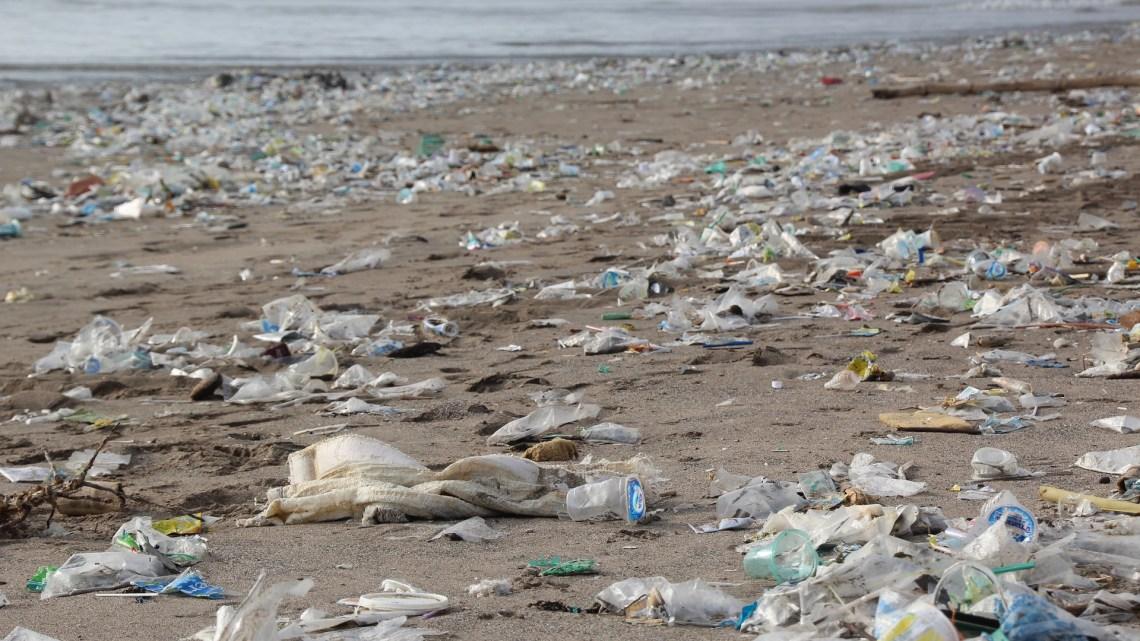 #4 1.000.000 tote Vögel und 100.000 tote Meeressäuger im Jahr