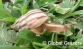Snail Checking out the Abidjan Grass