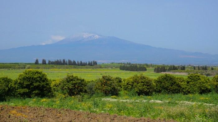 Sicily farming