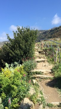 Cinque Terre Mountain Trails