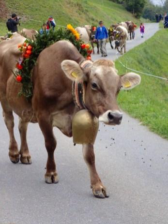 Alpine Descent Cow Parade