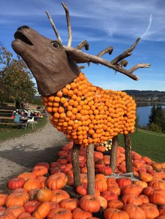 Jucker Farm_ pumpkin elk 2017
