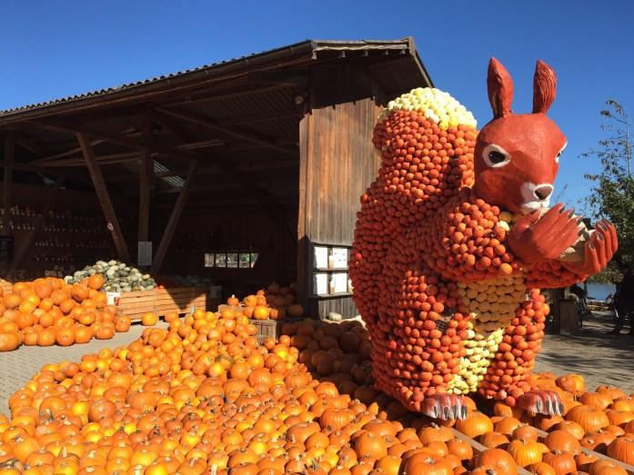Jucker Farm_ pumpkin patch