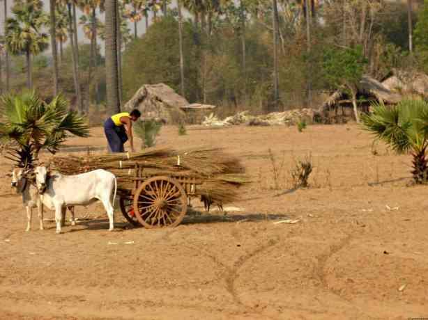 Snapshots of life in Burma