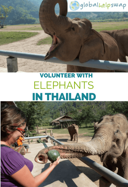 If you are looking to volunteer with elephants in Thailand then check out this post. Volunteer on a world renowned conservation project in Chiang Mai Thailand